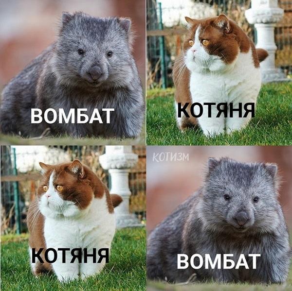 acs10.pikabu.ru_post_img_2019_08_29_7_1567072897134814124.jpg