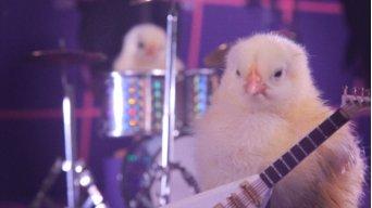 Chicken0id
